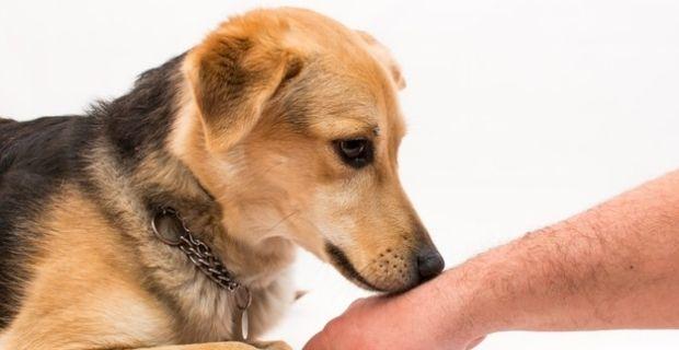 Agility: les techniques pour faire un bon dressage de chiens